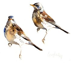 Darren Woodhead in Dunbar, East Lothian, United Kingdom, Waxwing Trio on Rosehips Birds Painting, Watercolor Fish, Art Painting, Animal Art, Watercolor Animals, Watercolor Bird, Bird Illustration, Watercolour Inspiration, Artwork Painting
