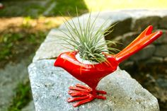 Bright enamel bird + ionantha tillandsia #airplants