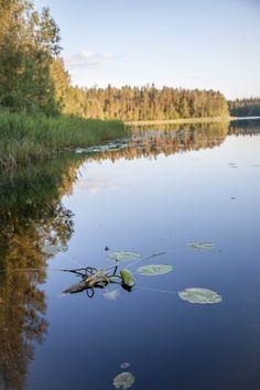 Kesäilta Kortejärven tilalla Tampereella.