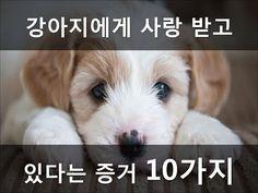 강아지가 당신을 사랑한다는 증거 10가지 - YouTube Dogs, Animals, Animales, Animaux, Pet Dogs, Doggies, Animal, Animais