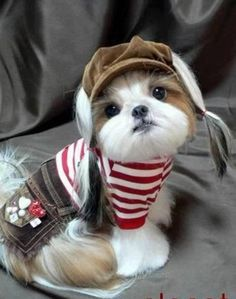 Tom boy#Funny#Cute#Puppy#Adorable