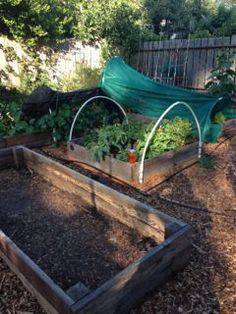 Vegetable Garden Layout - save time, energy and money - Leana Container Gardening Vegetables, Vegetable Gardening, Raised Garden Beds, Raised Bed, Buy Seeds, Diy Home Crafts, Growing Vegetables, Garden Bridge, Layout Design