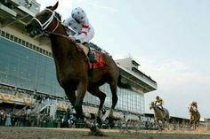 Big Brown Rules Preakness - The Preakness Stakes, Types Of Horses, Big Brown, Thoroughbred Horse, Racehorse, Kentucky Derby, Horse Racing, Champion, April 10