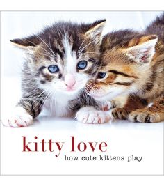 Kitty Love How Cute Kittens Play Book