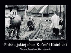 Memes, Horses, Funny, Photography, Animals, Women's Fashion, Happy, Poland, Jokes