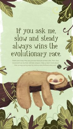 Small awareness campaigns for the sloth sanctuary of costa rica