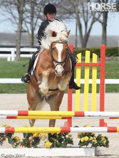Here's how to desensitize your horse to brightly colored and decorated jumps.