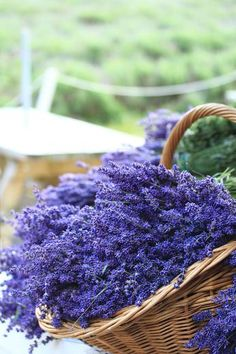 Lavender flowers in basket ✌️More Pins Like This At FOSTERGINGER @ Pinterest