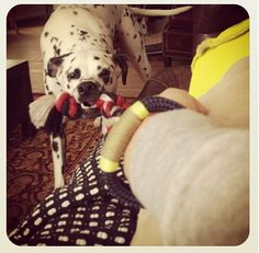@jlevesque with 2 great accessories #theropesmaine #bracelets #dalmatian