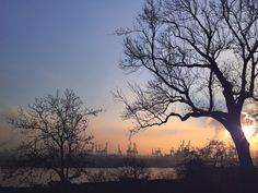 sunset, tree, sky, nature, beauty in nature, tranquility, silhouette, no people, outdoors, tranquil scene, scenics, water, day