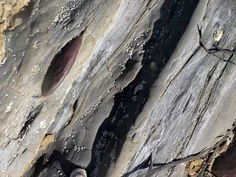 Rock strata, Widemouth Bay