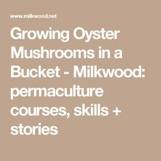 Growing Oyster Mushrooms in a Bucket - Milkwood: permaculture courses, skills + stories