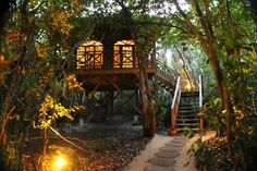 Hamanasi Adventure and Dive Resort: tree house in the evening