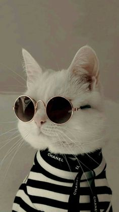 39 Cute Cat Wallpaper for Cat People – Page 8 Cute Baby Cats, Cute Little Animals, Cute Cats And Kittens, Cute Funny Animals, Cool Cats, Kittens Cutest, Funny Cats, Cute Dogs, Cute Babies