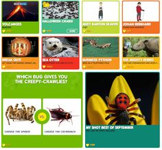 National Geographic Online…FREE games, quizzes and MORE!