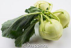Green Kohlrabi - preppings.com