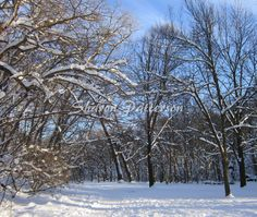 Photograph of winter scene at Alexander Muir Park, Toronto, Ontario. Artwork by Sharon Patterson may be PURCHASED at: http://1-sharon-patterson.fineartamerica.com/ AND http://www.bigstockphoto.com/search/?contributor=Sharon%20Patterson&safesearch=n AND http://www.canstockphoto.com/SharonPatterson/