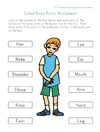 Body parts printable for kids