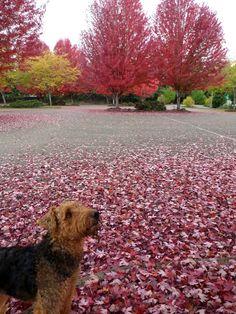 Fall fido fun! #cute #dog in #nature during the #fall season ! #woof!