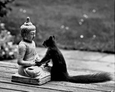Buddha - I want to have your peace, your wisdom, your serenity, your divine nature AND your acorn hat! Love, Squirrel I want a statue like this. Art Buddha, Buddha Wisdom, Buddha Peace, Buddha Statues, Buddha Quote, Funny Animals, Cute Animals, Small Animals, Tier Fotos