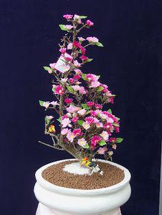 ต้นซากุระสัญลักษณ์ของญี่ปุ่น | SAKURA BONSAI TREE