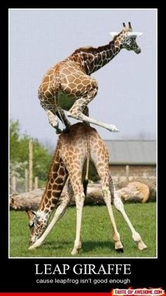 Leap frog...I don't think so! Leap GIRAFFE!