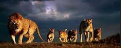 Image result for wildlife photography