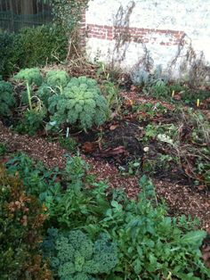 2 januar: still eating from my garden