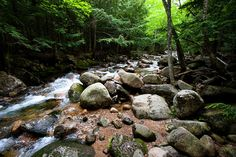 Forest Stream - Jason Smith - Prints and custom framing available!