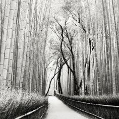Giant bamboo in Japan, Josef Hoflehner Best Landscape Photography, Landscape Photos, Fine Art Photography, Photography Ideas, Giant Bamboo, Black And White Landscape, Great Photographers, Photo Tree, Paris