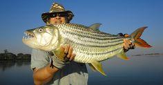 Fish with our expert fishing guides on a multi-day fishing tour on Zambezi River! Fishing Guide, Safari, Bucket, Tours, River, Buckets, Aquarius, Rivers