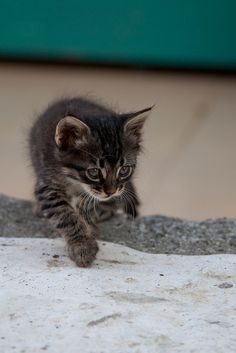 Stray Kitten Prowling, Sarigerme by flatworldsedge, via Flickr