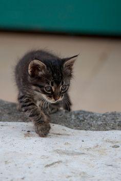 Stray Kitten Prowling, Sarigerme by flatworldsedge, via Flickr