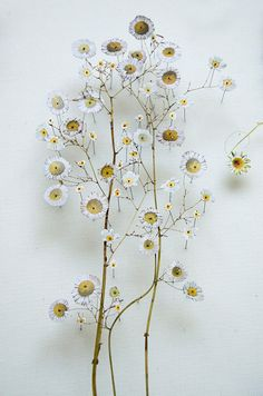 Anne Ten Donkelaar, Flower construction