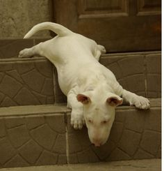 """#Bullie. """"I'm too tired to go down the stairs""""."""