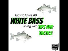 GoPro Style #8: White Bass Fishing with Tips and Tactics - (More info on: http://1-W-W.COM/fishing/gopro-style-8-white-bass-fishing-with-tips-and-tactics/)