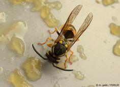 Tipps zum Wespen vertreiben