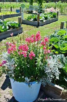 vegetable garden ~ blog ~ inspiration
