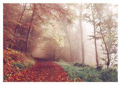 Herbstimmung | Fotografie | Echte Postkarten online versenden | MyPostcard.com