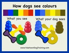How dogs see colors - keep this in mind if you are doing target training, retrieve training, or something that requires the dog to see an object against a background.