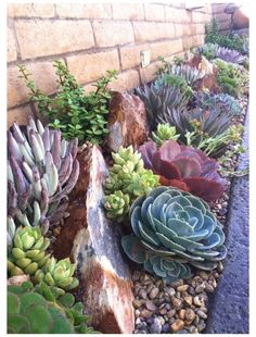 Succulent Landscaping, Small Backyard Landscaping, Planting Succulents, Landscaping Ideas, Mulch Landscaping, Succulent Gardening, Patio Ideas, Large Backyard, Propagate Succulents