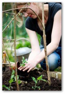 Small Vegetable Garden Planning Ideas for Beginners