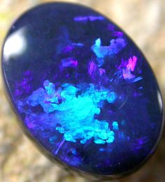 Black Opal Stones 11.15 x 8.15 x 4.1mm 2.51 carats Auction #236700 Opal Auctions