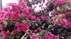 Flores na Rua....