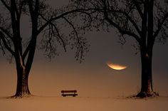 moon and bench, between the trees