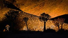 008_AS3_2522 Quiver, Photo Look, South Africa, Trees, Celestial, Sunset, Gallery, Outdoor, Beautiful