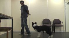 Teaching A Dog To Wear A Muzzle (Muzzle Training) - Chirag Patel Pet Dogs, Dogs And Puppies, Pets, Doggies, Dog Muzzle, Aggressive Dog, Dog Agility, Training Your Dog, Training Tips
