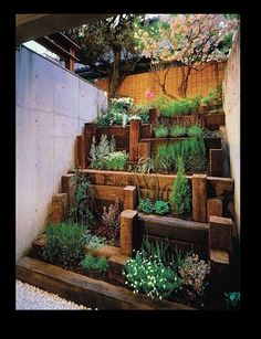 Just because you don't have a big garden is no excuse for not having lots of plants