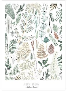 Fern Study Poster (DIN A2) by OHMYHOME