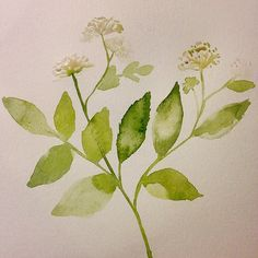 Speak healing. and Root Beer. #sarsaparilla #afloweraday2014 #pua #projectpua #singlestem #watercolor #art #abstract #medicinal #floral #wildflower #flowerstudy #modern #minimalist #fineart #abstract #impressionism #textile #design